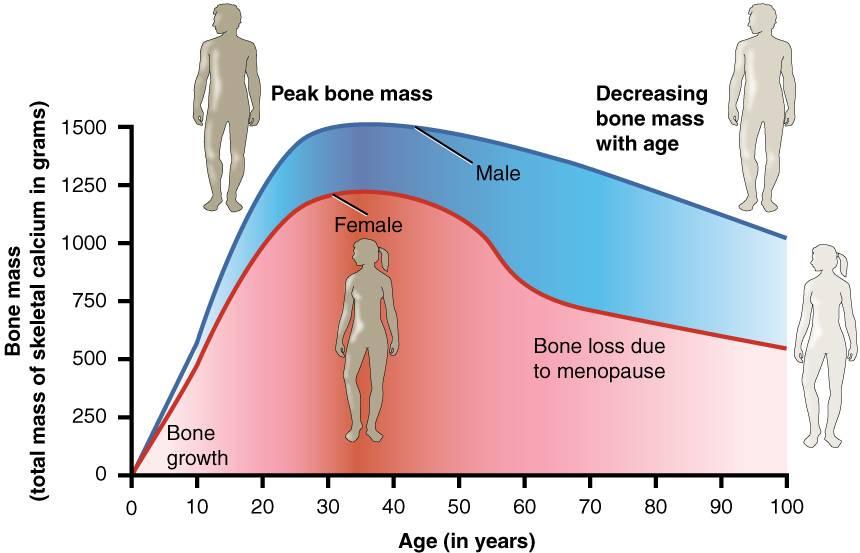 Bone Mass Chart